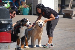 Dogs on the Seaside Heights boardwalk during National Dog Day, Aug. 26, 2015. (Photo: Daniel Nee)