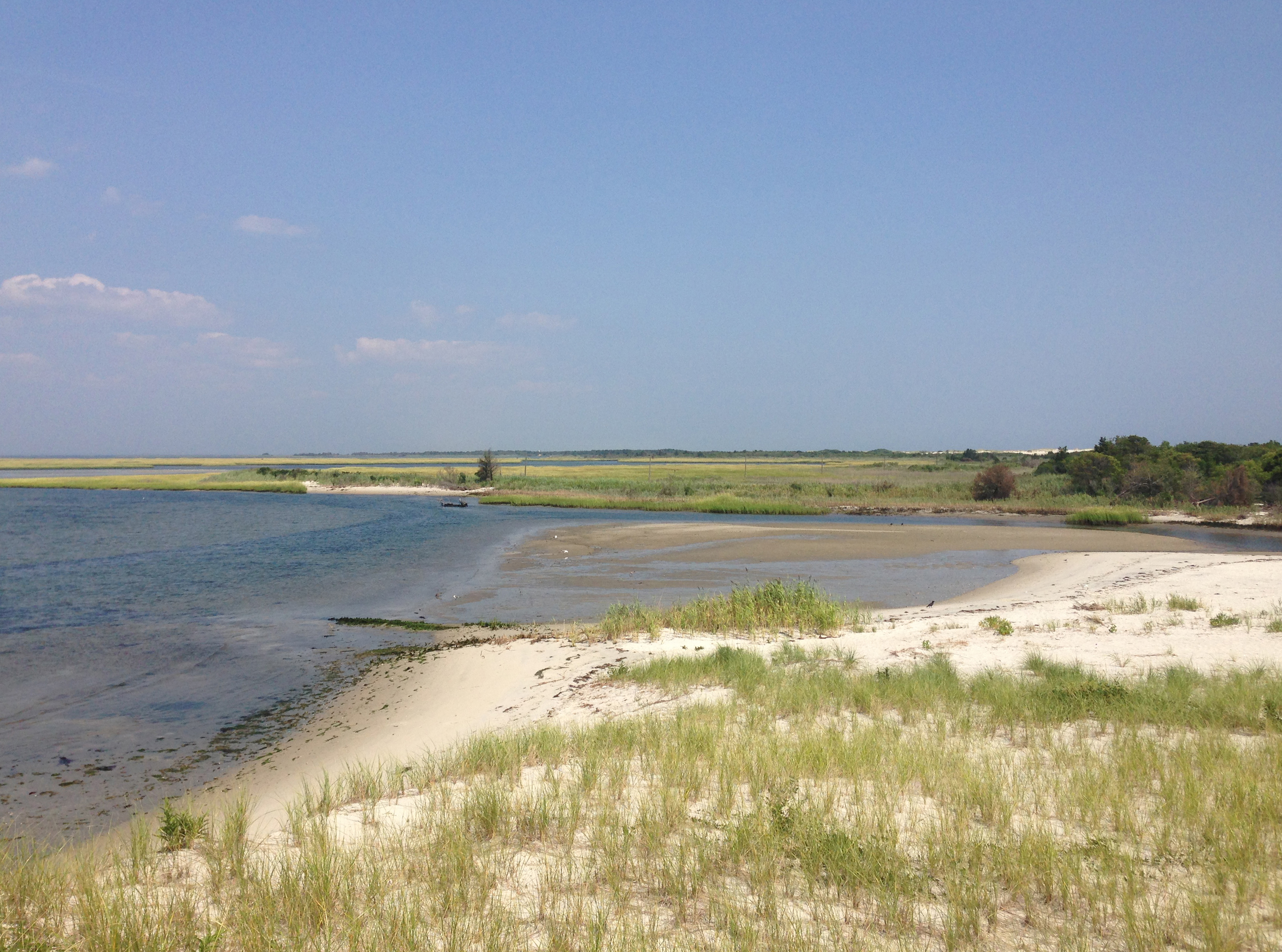 Marshes along Island Beach State Park's bayfront. (Photo: Wikimedia Commons)