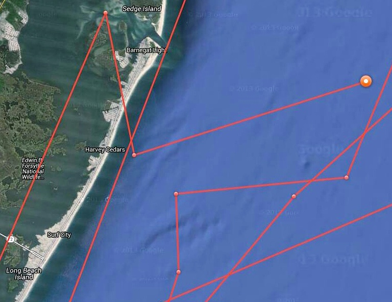 Mary Lee's curious track. (OCEARCH)