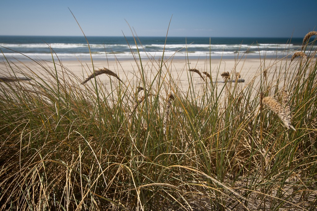 Dune grass. (Photo:  Andrew Malone/Flickr)