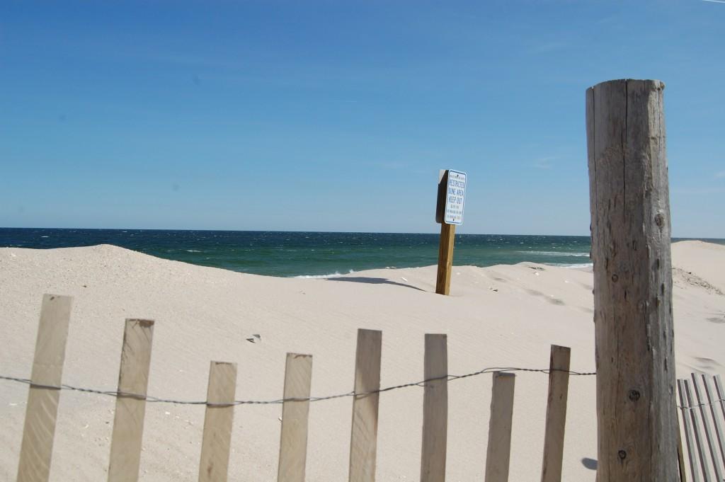 Dunes along Lavallette's beachfront. (Photo: Daniel Nee)