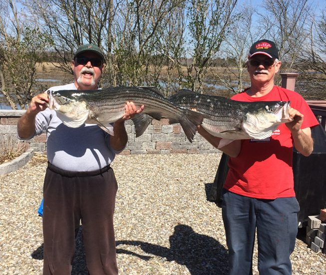 Striped bass weighed in a Pell's Fish & Sport, Brick. (Credit: Pell's Fish & Sport)