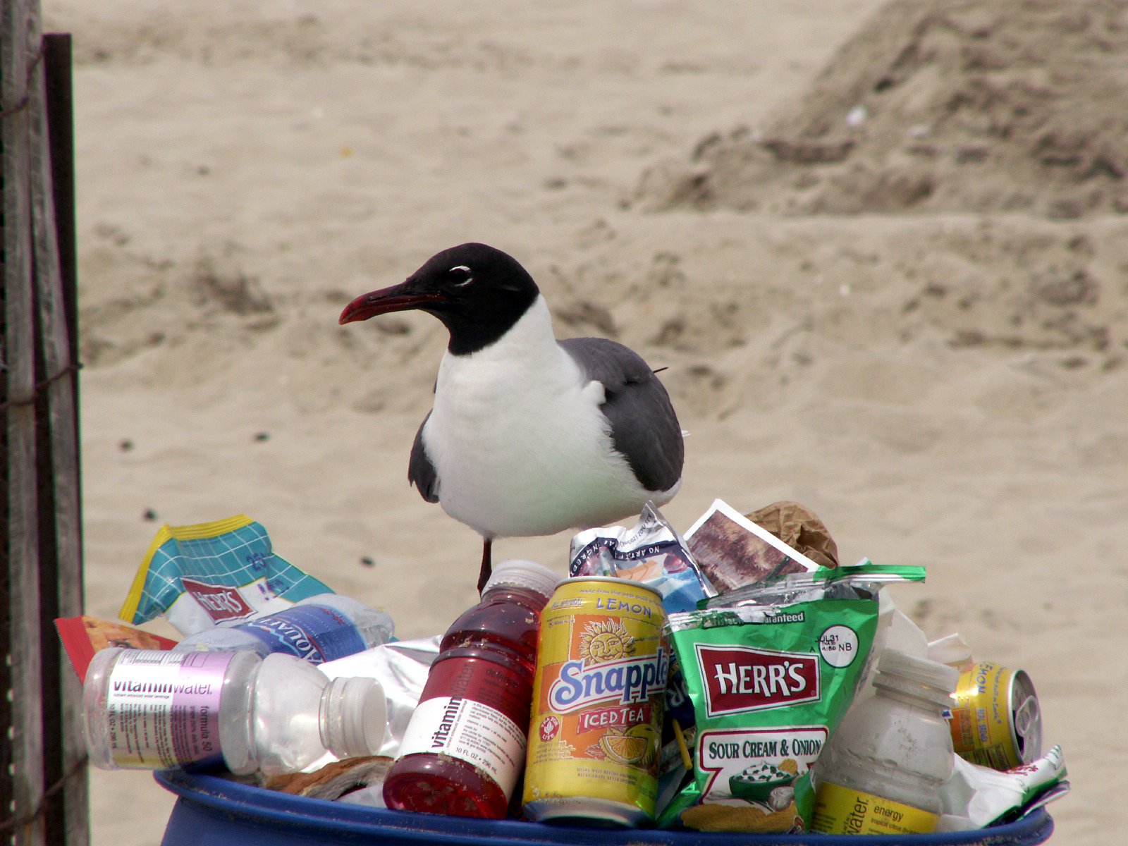 Seagulls targeting a trash can on a New Jersey beach. (Photo: Jackie/Flickr)
