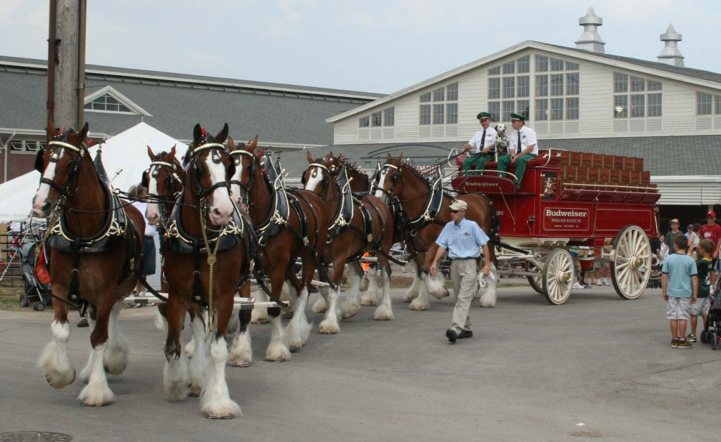 Budweiser Clydesdales. (Photo: Budweiser)