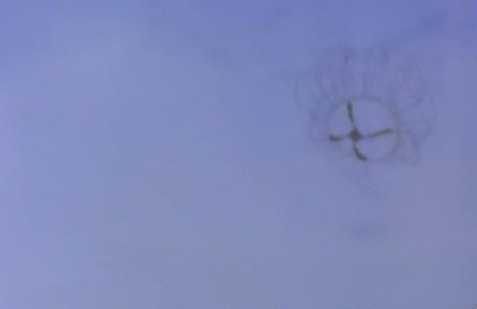 Clinging Jellyfish (Photo: NBC Philadelphia)