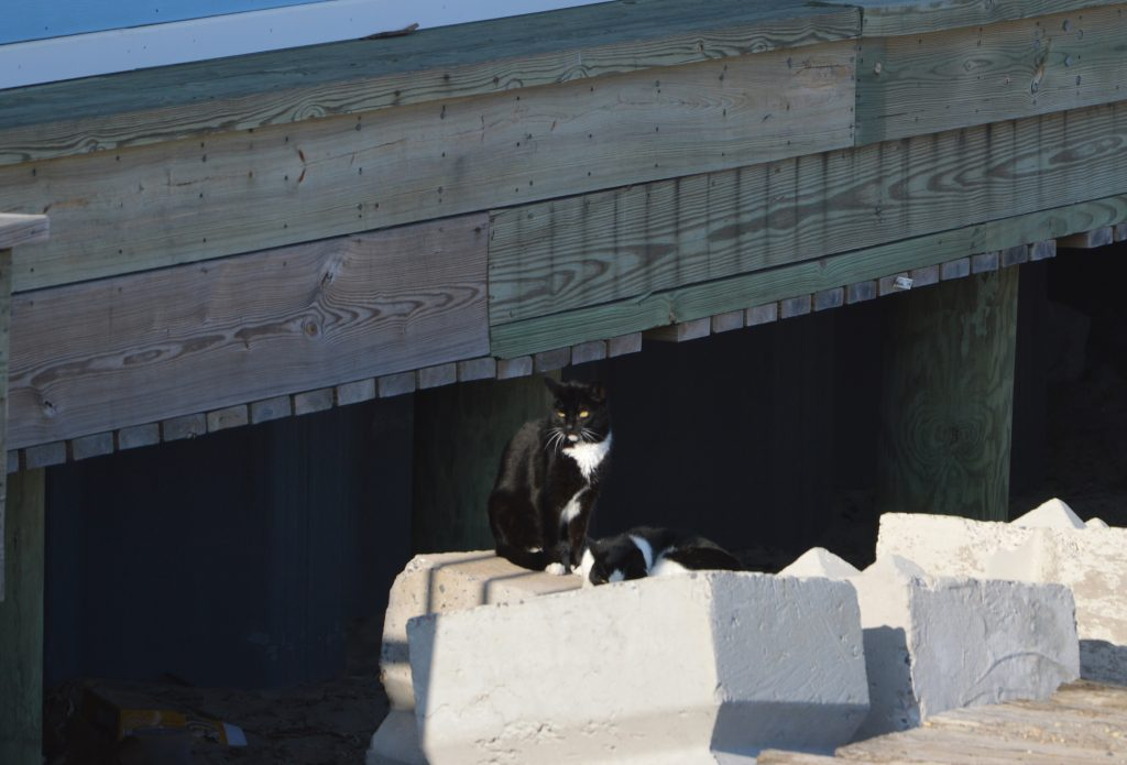 Two feral cats lounge near Casino Pier in Seaside Heights. (Photo: Rachael Bowen)
