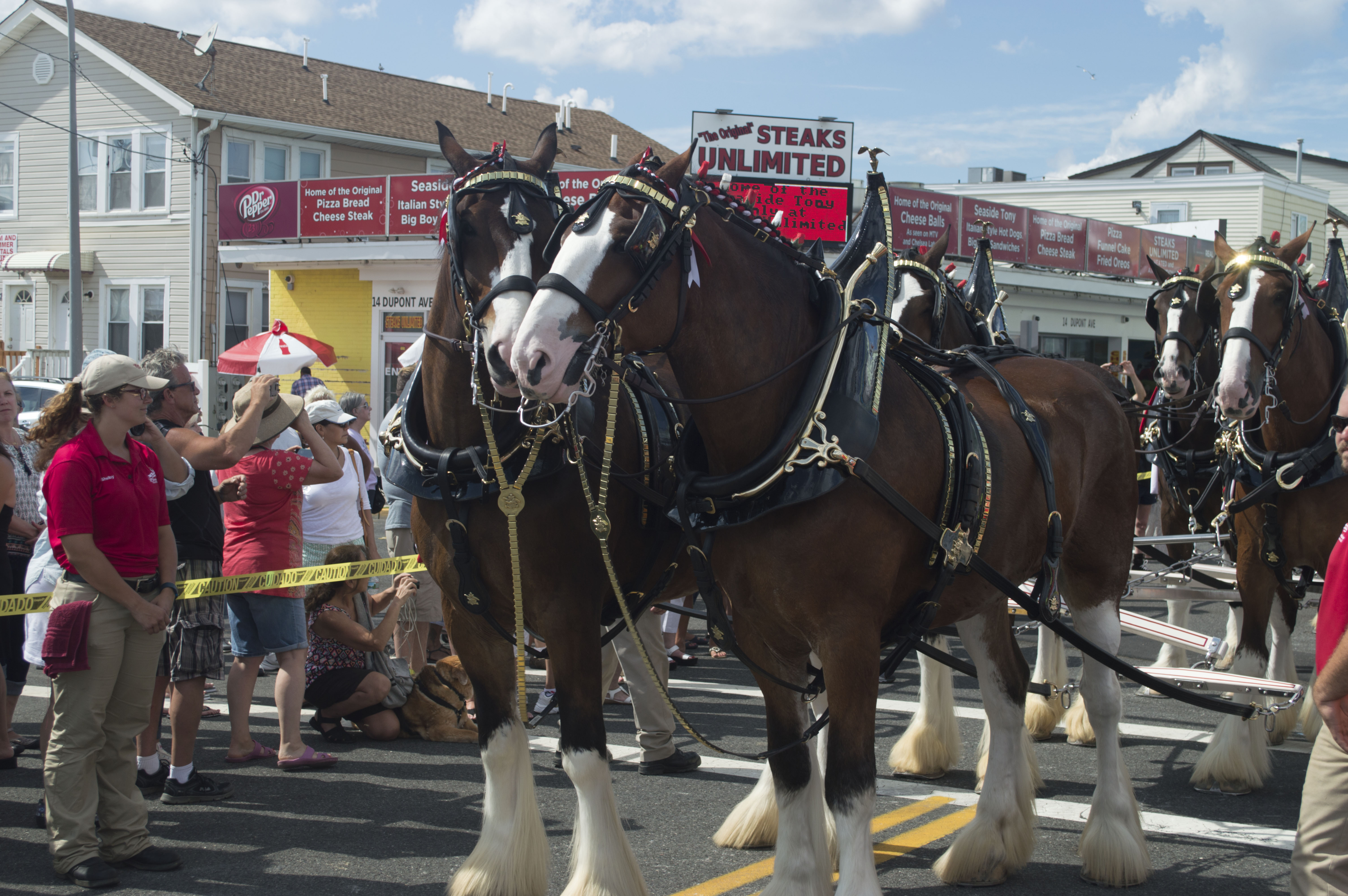The Budweiser Clydesdales stroll through Seaside Heights, July 10, 2016. (Photo: Daniel Nee)