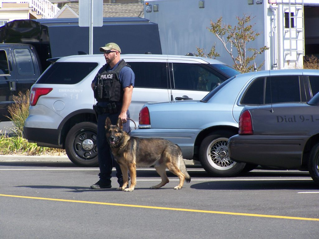 A police K9 in Seaside Park, following an explosion, Sept. 17, 2016. (Photo: Bob Vosseller)