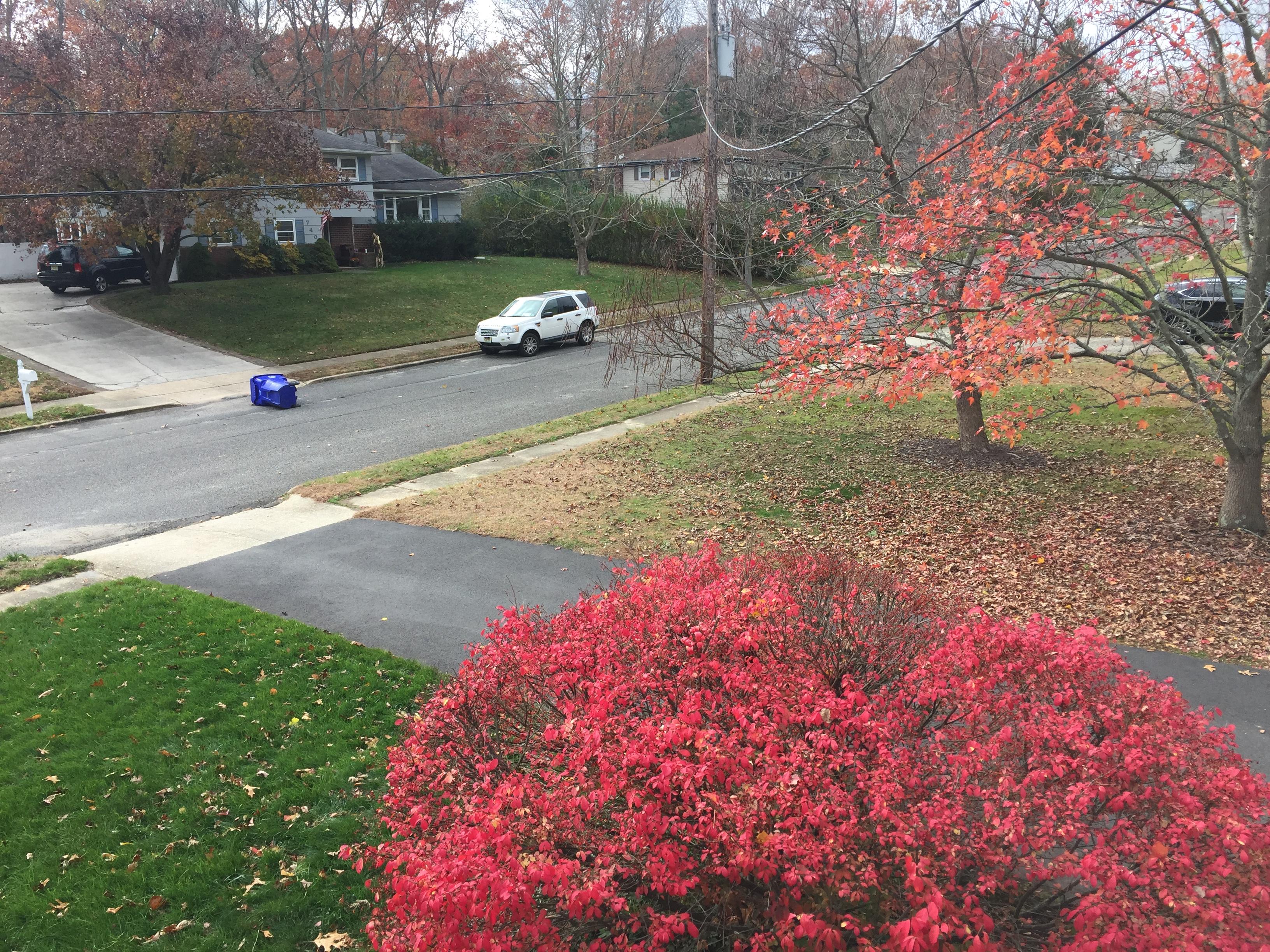 Fall weather in Ocean County, NJ, Nov. 21, 2016. (Photo: Daniel Nee)