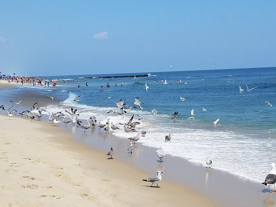 Birds swarm baitfish at a local beach, Aug. 14, 2018. (Photo: Patricia Nee)