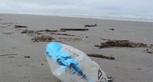 A deflated balloon on a beach. (Courtesy: NOAA/Credit: Russ Lewis)