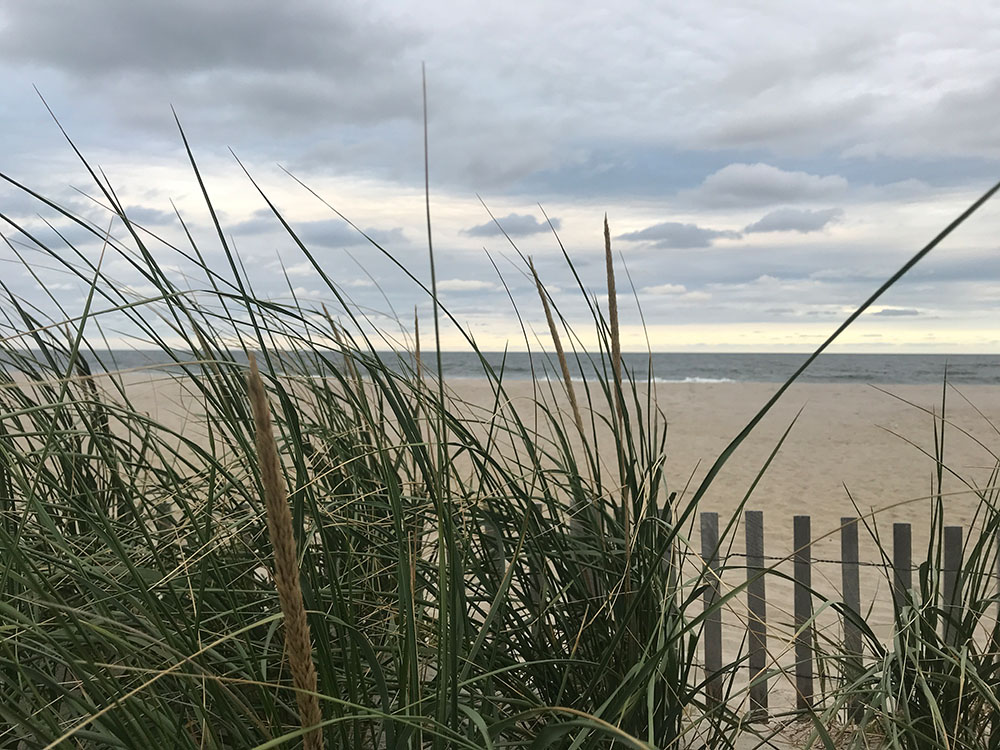 Dune grass in Ortley Beach, N.J. (Photo: Daniel Nee)