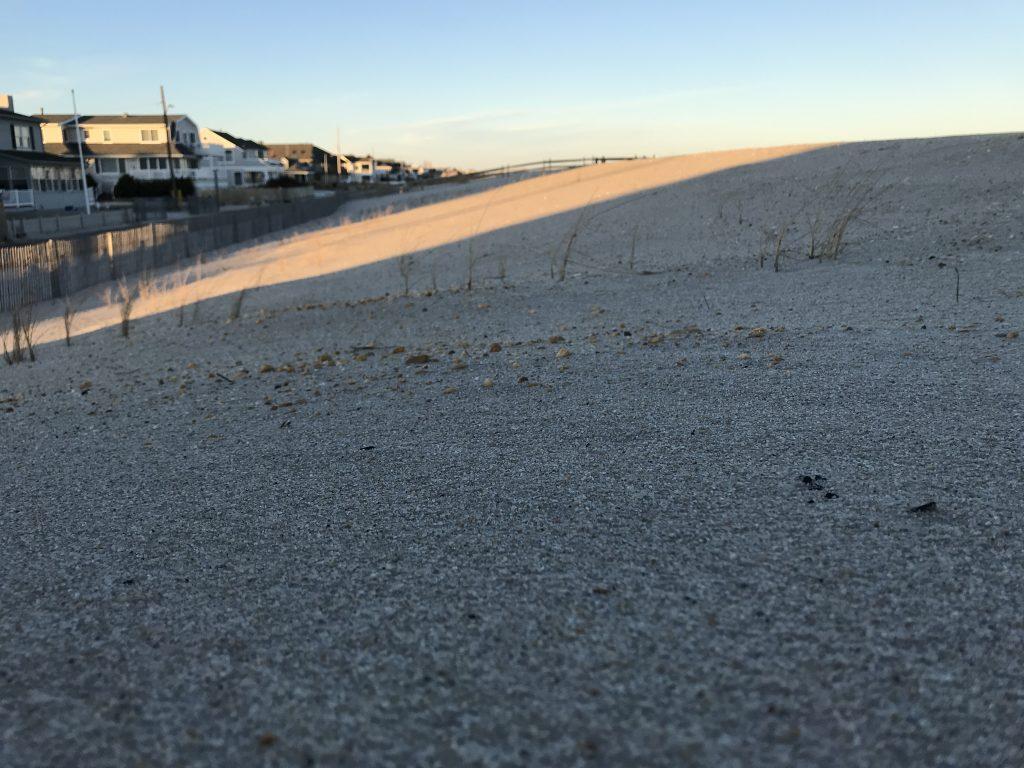 Bare dunes in Lavallette, Dec. 2019. (Photo: Daniel Nee)