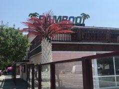 Bamboo, Seaside Heights, July 2020. (Photo: Daniel Nee)