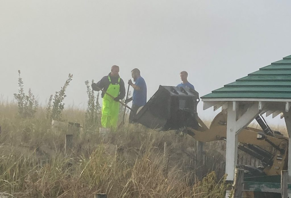 Volunteers plant dune shrubbery in Seaside Park, Oct. 2020. (Photo: Bob Hopkins)
